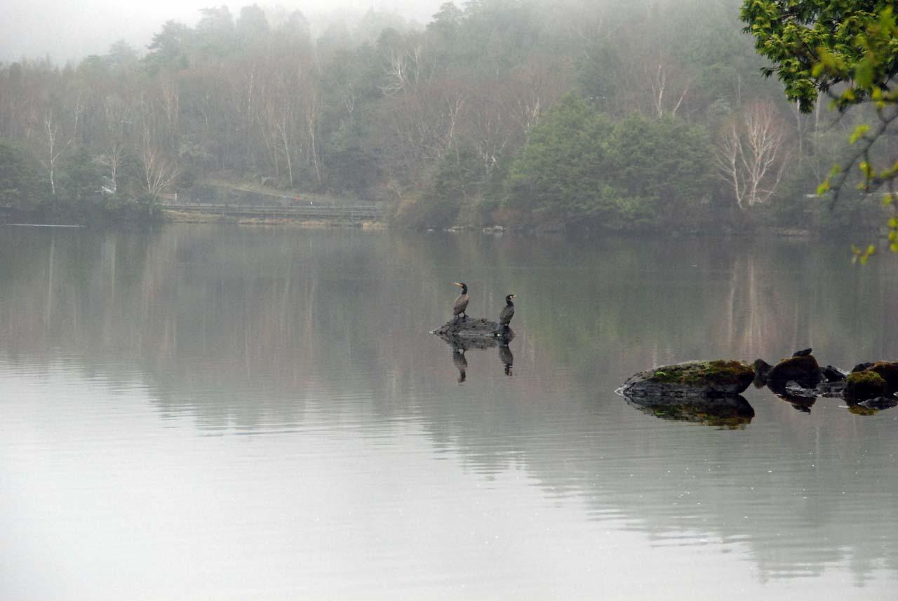 DSC_9601湯ノ湖