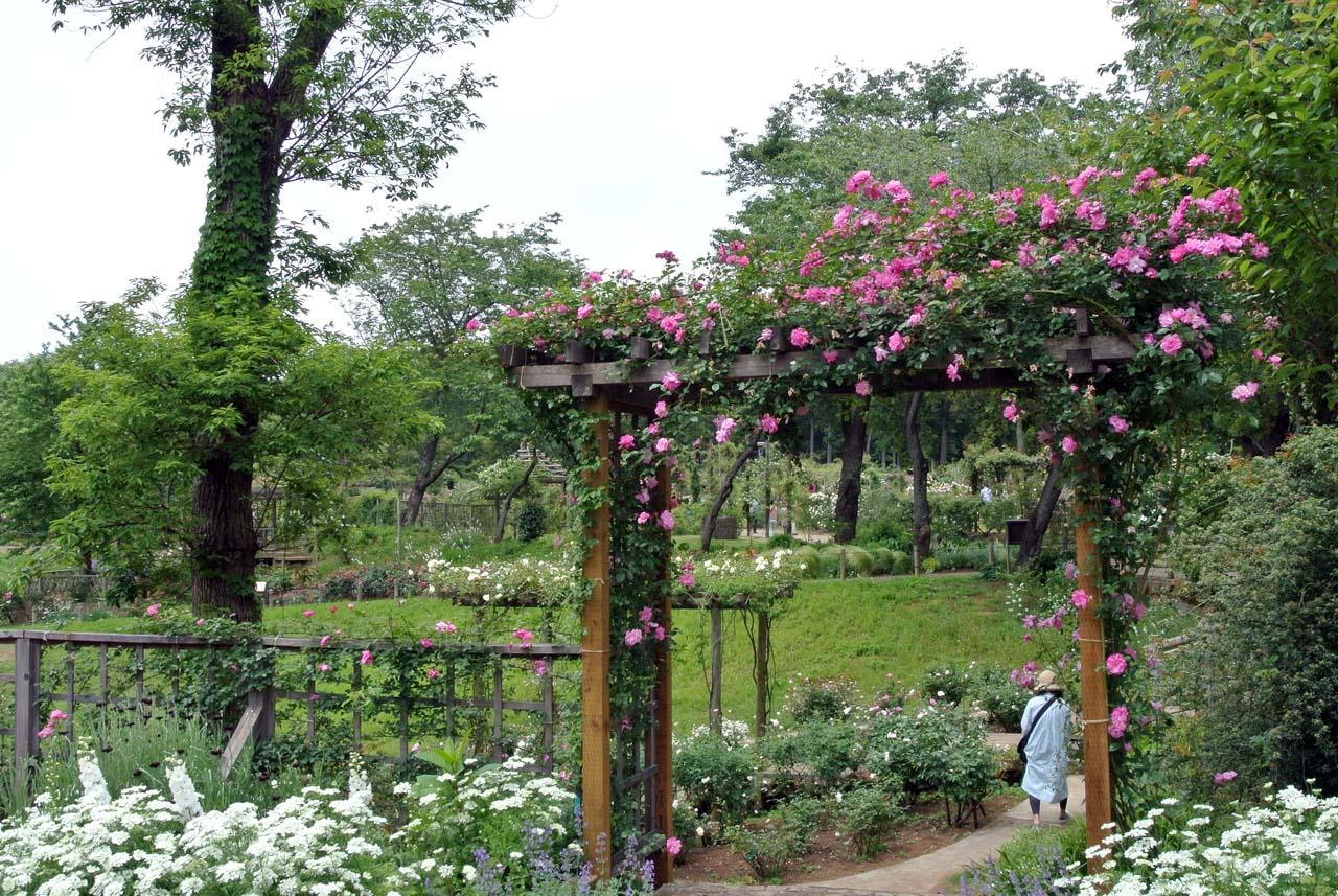 DSC_4054薔薇