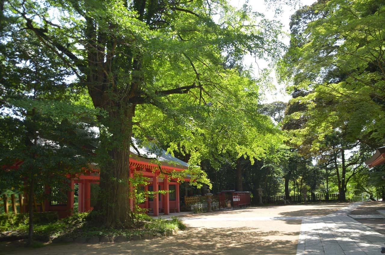 D70_2649香取神宮