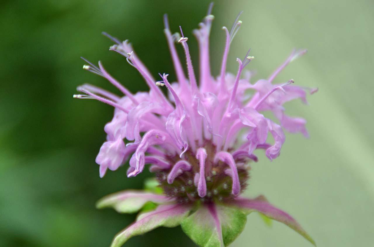 D70_2698今日の花
