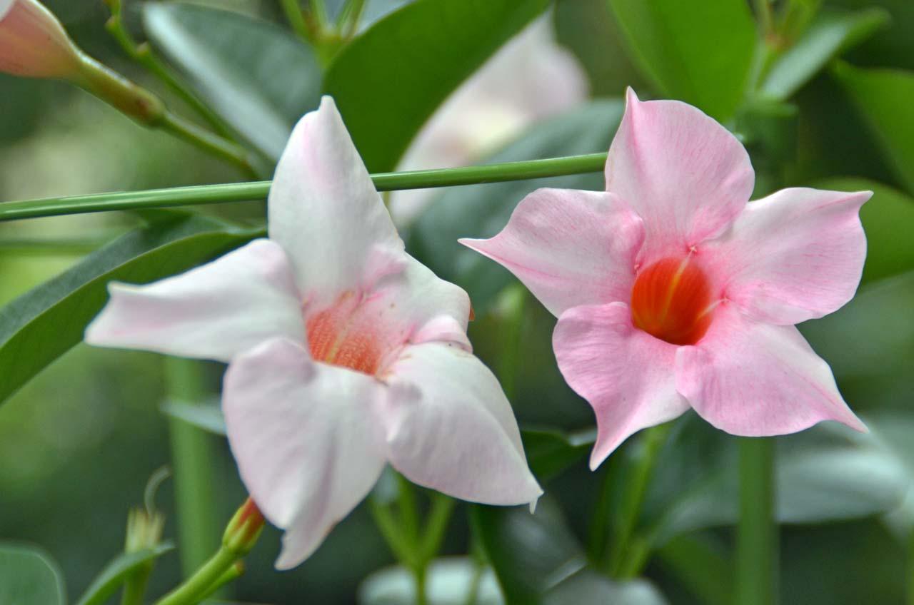 D70_2708今日の花