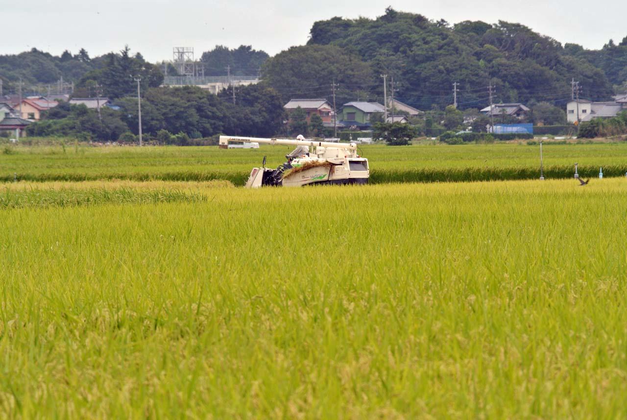 DSC_8067手賀沼周辺