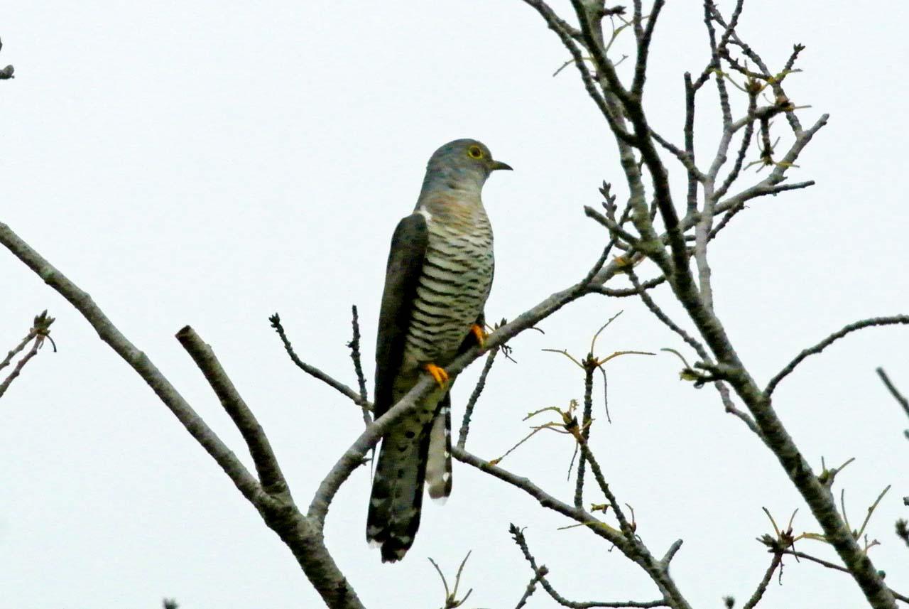 DSC_8653探鳥会