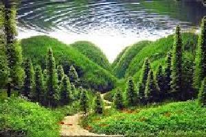 aquaforest.jpg