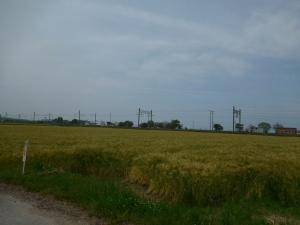 20160514_10麦畑