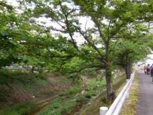 20160529_27柳田橋へ