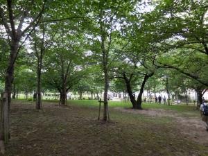 20160625_11毛馬桜ノ宮公園
