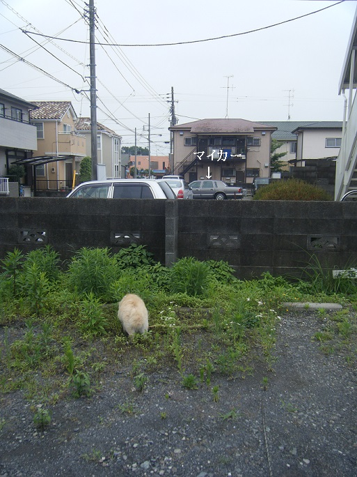 隣の駐車場