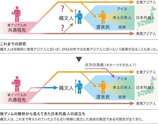 縄文人の核ゲノム解析から見えてきた日本列島人の成立ち