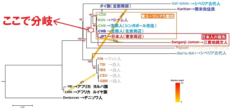 縄文人 DNA