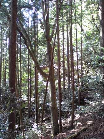 2016_04_17_赤岩尾神社_161