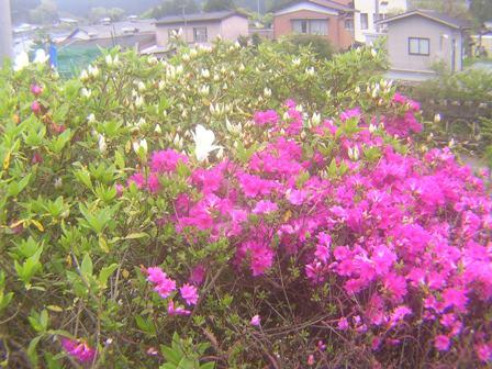 2016_04_25_伊勢奥津_139