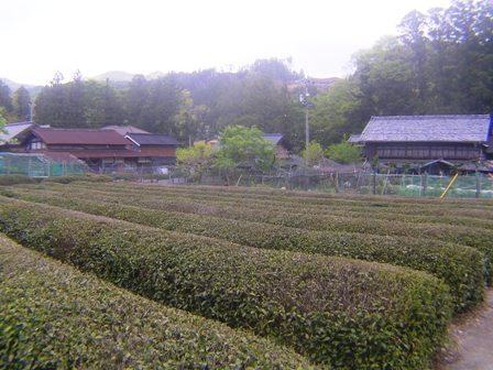 2016_04_25_伊勢奥津_180