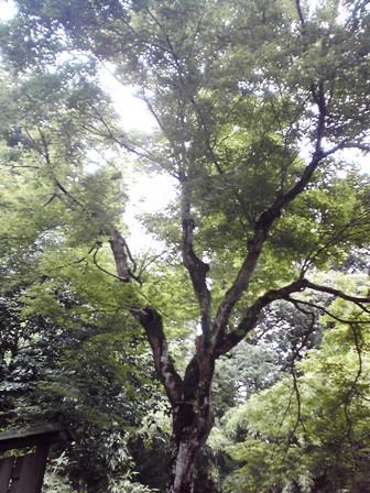 2016_06_29_穴石神社_28