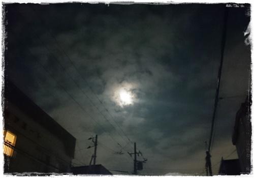 ふきのとうDSC_4544