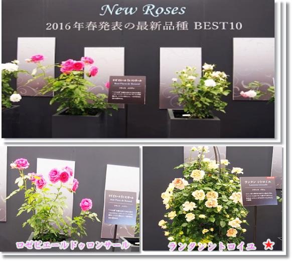 2016年発表新種バラ3-2