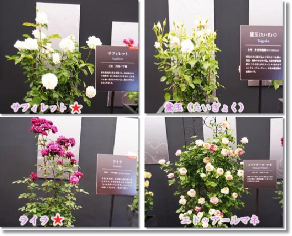 2016年発表新種バラ1-2