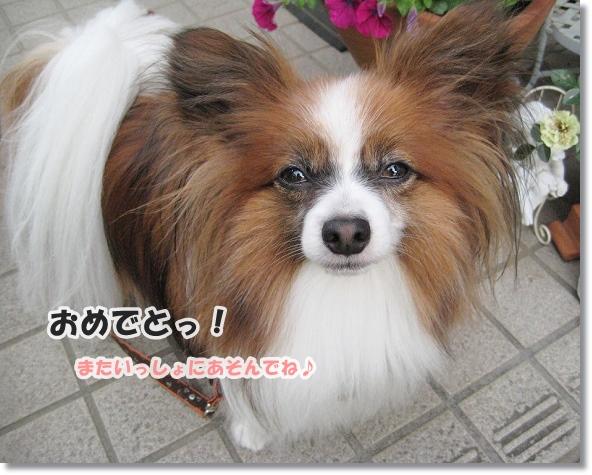 IMG_5433-2.jpg