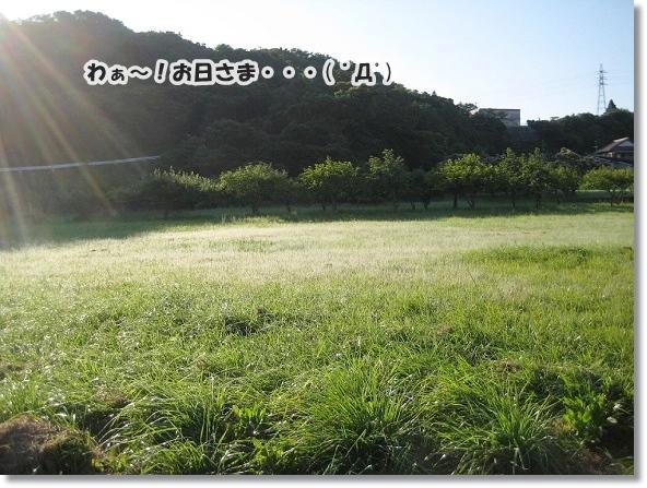 IMG_5470-3.jpg