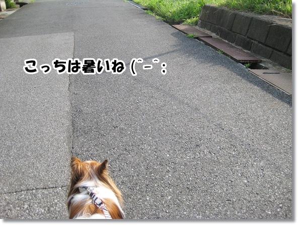 IMG_5529-3.jpg