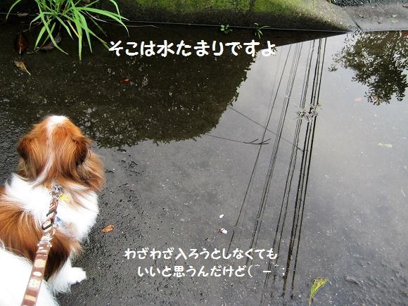 IMG_6100-2.jpg