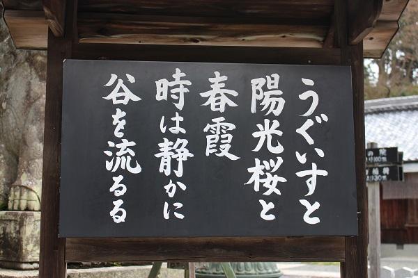 2016.04.19 柳谷観音(桜)-4