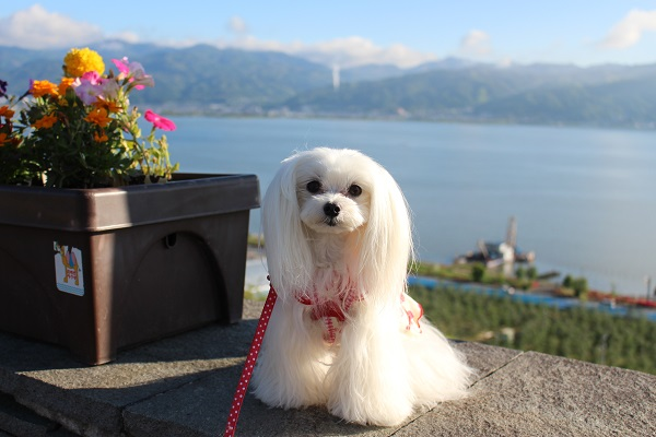 2016.05.28 富士五湖旅行 1日目① 諏訪湖SA-2