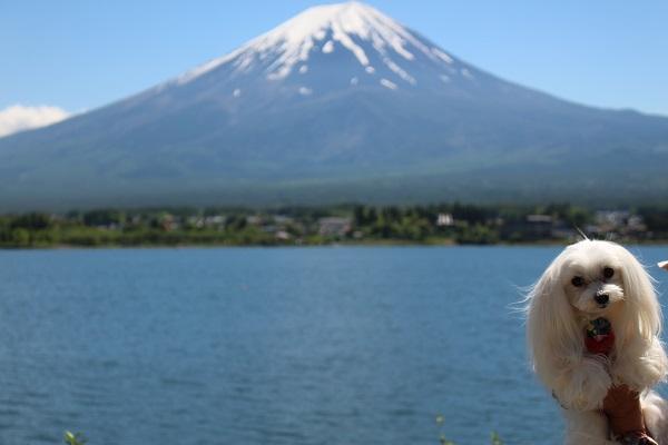 2016.05.31 富士五湖旅行 1日目⑩ 大石公園-4