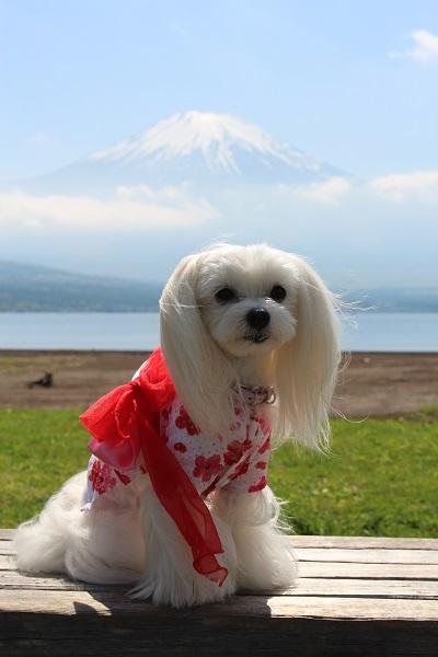 2016.06.07 富士五湖旅行 2日目⑥ 交流プラザきらら①-10