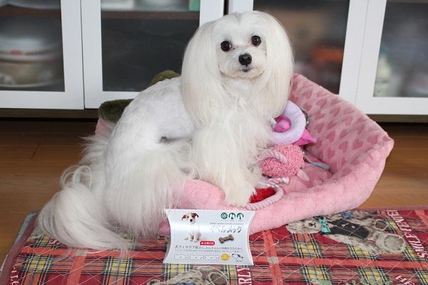 2016.07.10 狂犬病予防接種-2