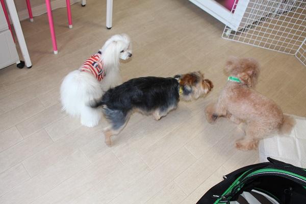 2016.07.23 看板犬のお仕事-7