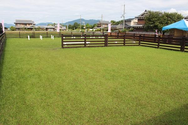 2016.10.16 亀岡夢コスモス園①-4
