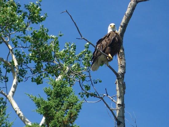 FC13-eagle.jpg
