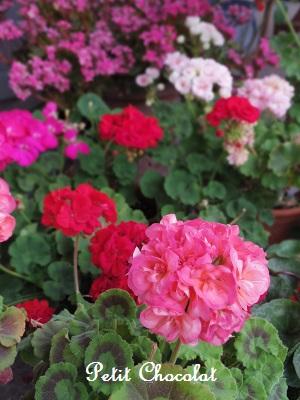 flower_20160513024744264.jpg