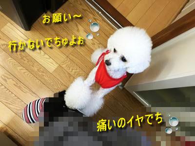 022_sc160614.jpg