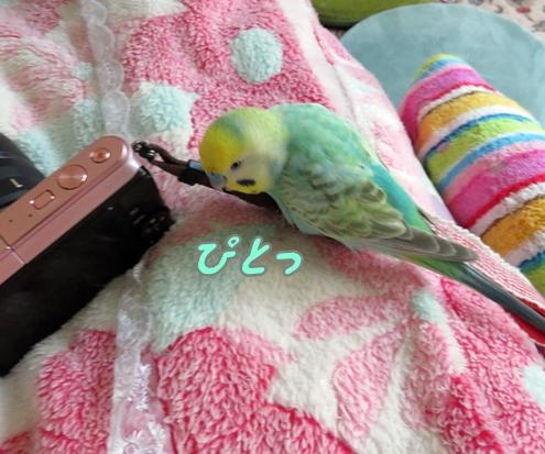 ディジーにカメラ 003ぴとっ