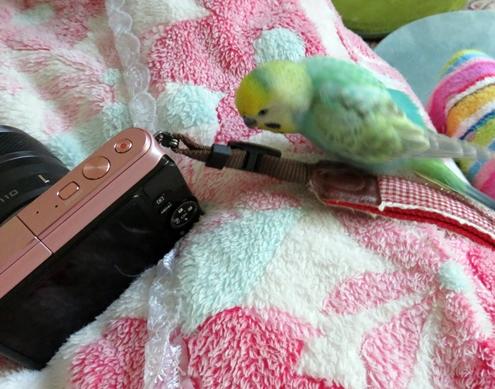 ディジーにカメラ 004見つめる