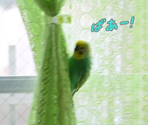 カーテントレーニング 006-6ばあ