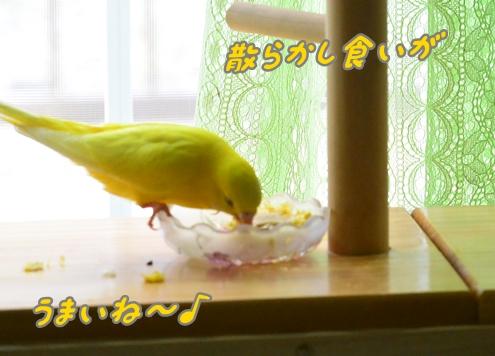 トウモロコシうまし 002-2
