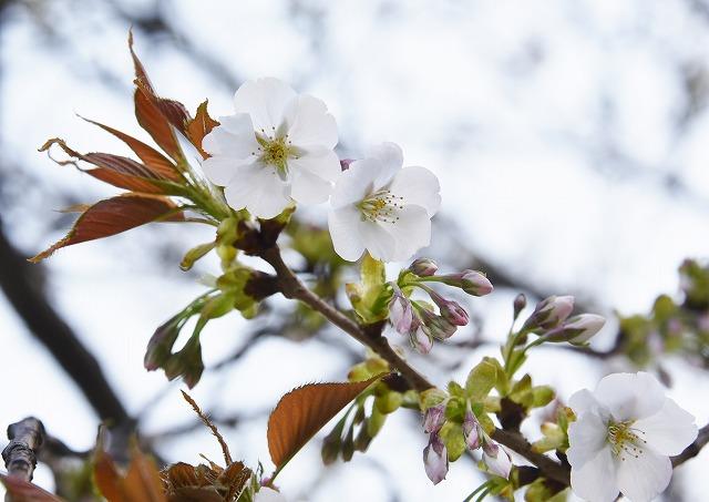花のまわりみち3