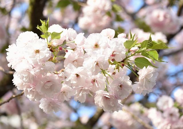 花のまわりみち8