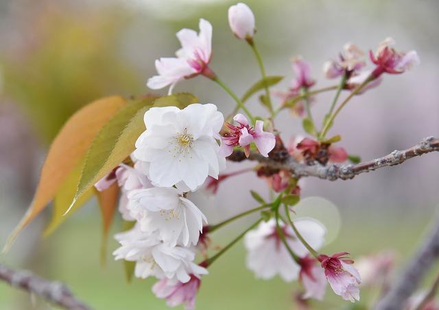 花のまわりみち13