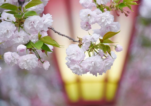 花のまわりみち15