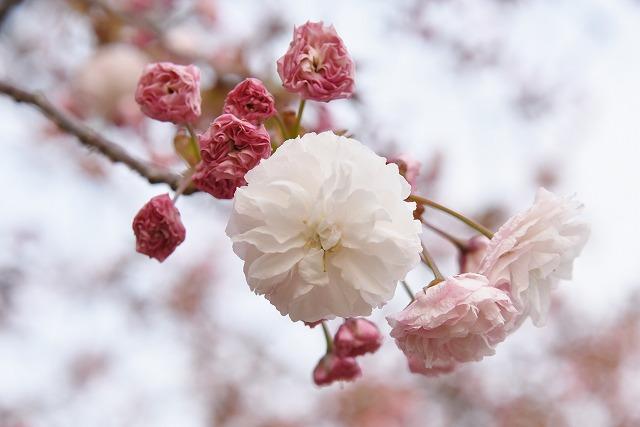 花のまわりみち6