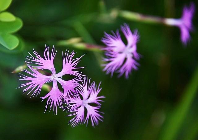 初秋の花7