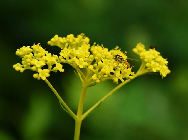 初秋の花3