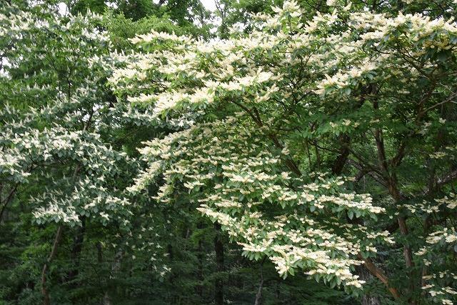 初秋の花13