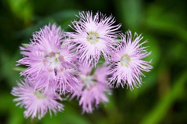初秋の花14