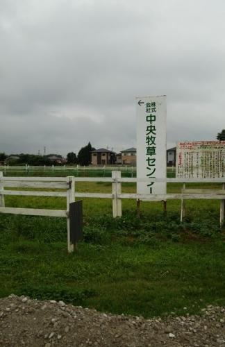牧草000