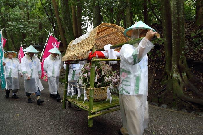 率川神社 ササユリ奉献1